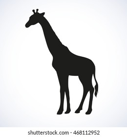 Giraffa camelopardalis is even-toed ungulate mammal isolated on white background. Black ink hand drawn image sketch in art retro style pen on paper. Side view with space for text