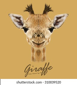 Giraffe animal face. Vector cute head of African giraffe. Realistic savannah wild fur funny giraffe baby portrait isolated on tan background.