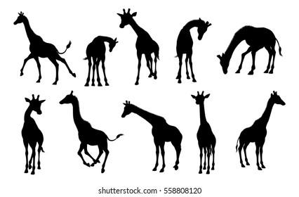 Giraffe Images, Stock Photos & Vectors | Shutterstock