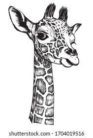 Giraffe baby head. Drawn by hand with pen. Realistic vector illustration.