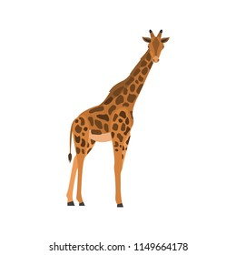Giraffe color vector icon. Flat design