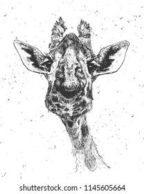 Giraffe face, vector illustration