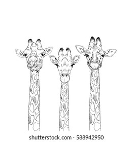 giraffe heads sketch set