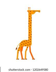 Giraffe isolated. Long neck beast. Africa animal.