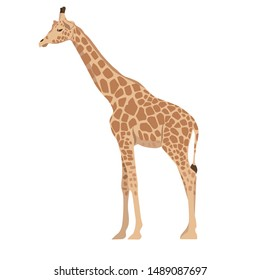 Giraffe isolated on a white background. Vector graphics.