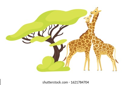 Giraffe pair flat color vector illustration. Pair of african animals near exotic tree. Flora and fauna. Green foliage. Southern creature isolated cartoon character on white background