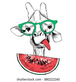 Giraffe portrait with a watermelon. Vector illustration.