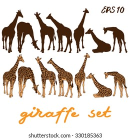 Giraffe set. Vector illustration