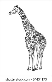 giraffe vector in black ink hand drawn sketch isolated on white background