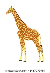 Giraffe vector illustration isolated on white background. African animal. Tallest animal. Safari trip attraction. Big five. Giraffe in standing pose. Portrait of giraffe.