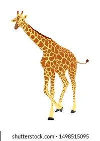 Giraffe vector illustration isolated on white background. African animal. Tallest animal. Safari trip attraction. Big five. Giraffe in gallop pose. Portrait of giraffe.