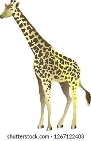 Giraffe , Wild Animal From Savana Afroca - Vector Illustration