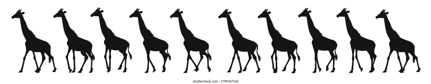 The giraffe's walk. Sequences for animation.