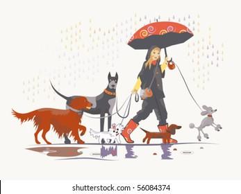 Girl, dog-walker, taking pack of dogs for a walk.