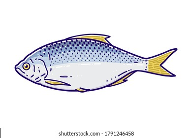 Gizzard shad. Colored vector illustration.