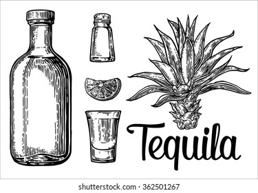 Glass and botlle of tequila. Cactus, salt and lime. Engraving vintage vector black illustration. Isolated on white background. Hand drawn design element for label and poster