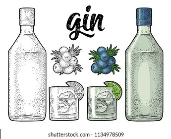 Glass, bottle and branch of Juniper with berries. Handwriting lettering gin. Vintage vector color engraving illustration for label, poster, web. Isolated on white background