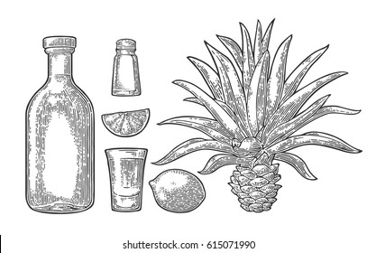 Glass and bottle of tequila. Cactus blue agave, salt and lime. Hand drawn sketch set of alcoholic cocktails. Vintage black vector engraving illustration for label, poster. Isolated on white background