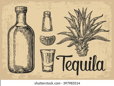 Glass and bottle of tequila. Cactus, salt and lime  Hand drawn engraved set of alcoholic cocktails. Vector vintage illustration. For poster, label