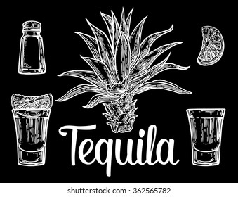 Glass of tequila with salt and lime. Cactus blue agave. Engraving vintage vector   white illustration. Isolated on black background. Hand drawn design element for label and poster