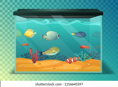 Glassware aquarium with exotic tropical fishes. Fish tank with emperor and golden fish, swimming angelfish, domestic discus and coral, vivarium. Underwater life and nature theme