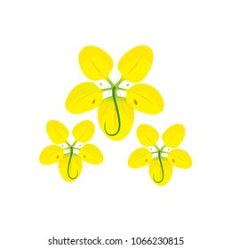 Gloden Shower Flower - Cassia Fistula Vector Illustration on white background