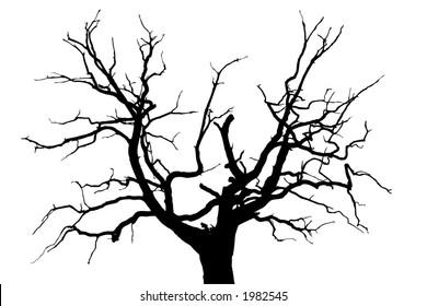 A gloomy dead oak tree