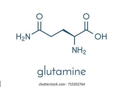 Glutamine (l-glutamine, Gln, Q) amino acid molecule. Skeletal formula.