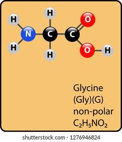 Glycine Amino Acid Molecule Ball and Stick Structure