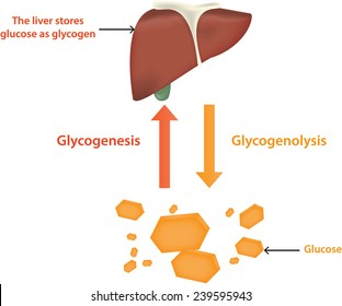 Glycolysis and Glycogenolysis