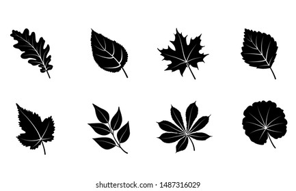 Glyph autumn leaves set. Isolated on white background. Black silhouettes leaves - oak, maple, grape, rowan, birch. Vector illustration.