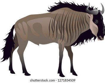 Gnu Wildebeest, African Wild Life Animal - Vector Illustration
