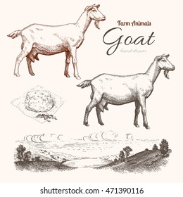 Goat. Animal husbandry. Goat, goat chease and countryside in graphic style. Set of vector scetches.