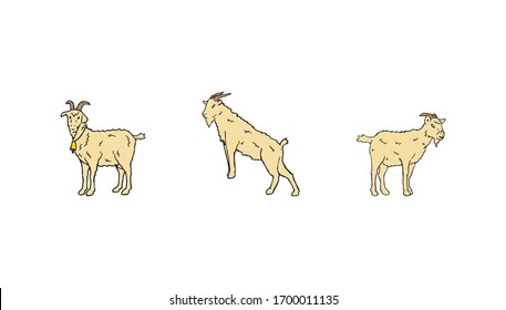 Goat drawing set hand drawn illustration. Farm animal cartoon drawing. Domestic cattle mammal with horn standing logo symbol.