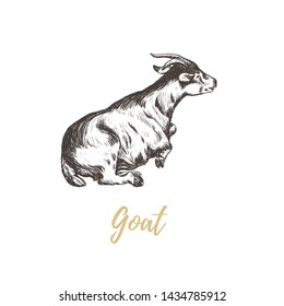 Goat hand drawing. Goat skech. Goat vector