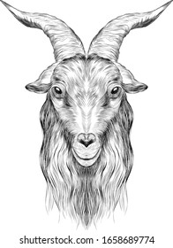 goat head black and white sketch coloring book portrait with horns profile bar graph symmetry vector illustration