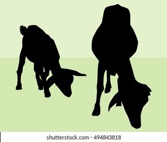 Goat & Kid  Silhouette- Vector