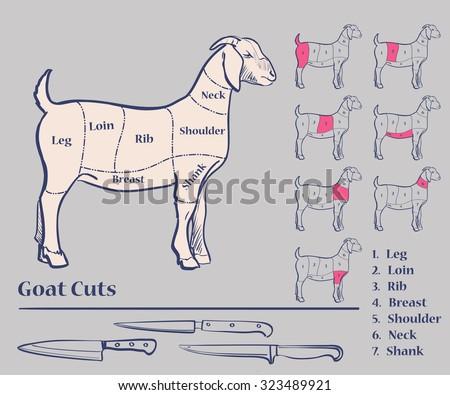 Goat Leg Diagram Circuit Diagram Symbols