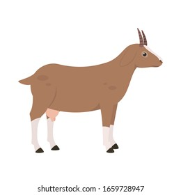 goat on the side. Isolated vector illustration