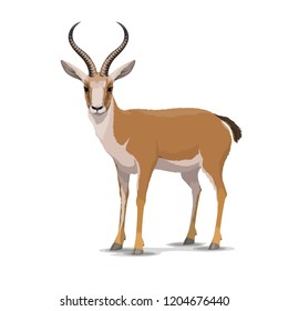 Goitered gazelle animal character. Vector isolated cartoon African wild black-tailed gazelle species with long horns. Zoo, zoology or hunting open season and Safari theme