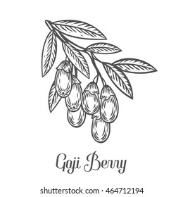 Goji berry, fruit, leaf, plant branch. Superfood organic asian berry. Hand drawn gogi vector sketch engraved illustration. Black goji berry isolated on white background