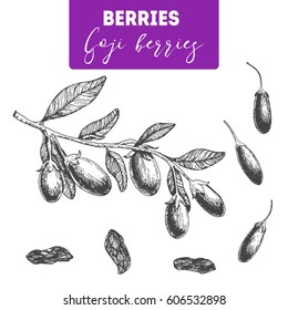 Goji berry hand drawn vector illustration set. Engraved food image.