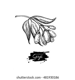 Goji berry vector superfood drawing. Isolated hand drawn  illustration on white background. Organic healthy food. Great for banner, poster, label, sign