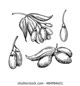 Goji berry vector superfood drawing set. Isolated hand drawn  illustration on white background. Organic healthy food. Great for banner, poster, label, sign