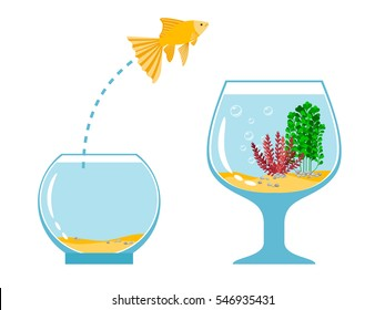 Gold fish jumping escape from fishbowl to other aquarium simple vector illustration. Fish pet jump to tank bowl with water