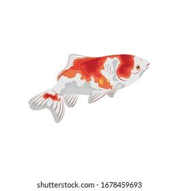Gold Fish Wakin Illustration vector