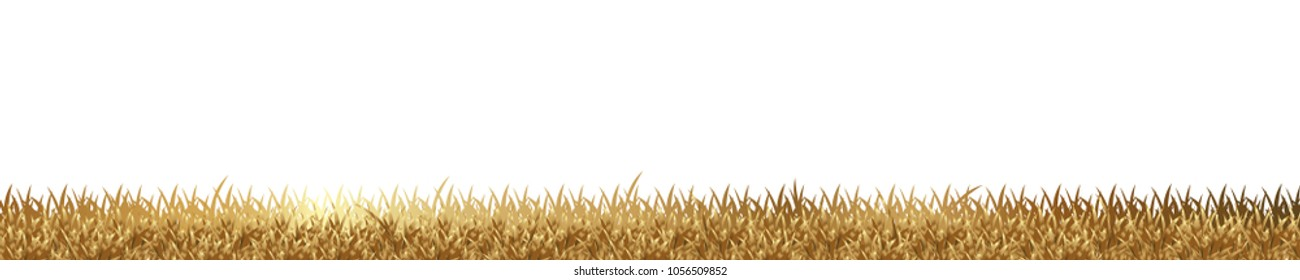 gold grass is longitudinal to use as a design element isolated on white background Vector for artwork & Magazine background