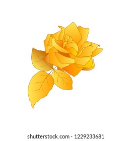 Gold Rose. Hand drawn flower of yellow rose isolated on white background. Symbol of love, decoration element for wedding, Valentine's day, print, icon. Sketch style, vector.