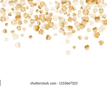 Gold seashells vector, golden pearl bivalved mollusks. Aquatic scallop, bivalve pearl shell, marine mollusk isolated on white wild life nature background. Cool gold sea shell graphics.