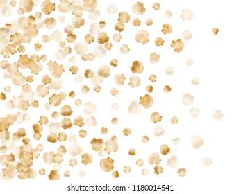 Gold seashells vector, golden pearl bivalved mollusks. Sea scallop, bivalve pearl shell, marine mollusk isolated on white wild life nature background. Rich gold sea shell design.